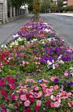 Sárospatak, town of flowers