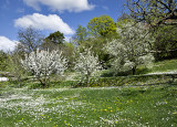 40 trees in the orchard make for a dazzling spring