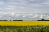 Estonian countryside