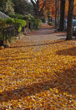 The End of Fall (Converging Lines Challenge)