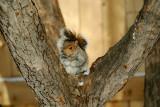 La cocaïne fait aussi des ravages chez les écureuils.