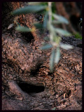 Face olive copya.jpg