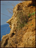 Crete Face Mimetolith