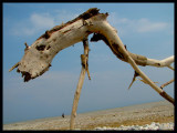 beach creature copy.jpg