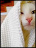 cathood_edited-1.jpg