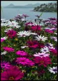 viewflower copy.jpg