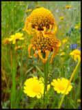 flowers copy.jpg