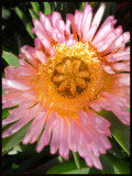 pink flower copy.jpg