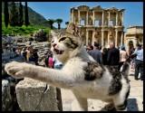 cat at c.jpg