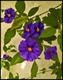 purple plusss.jpg
