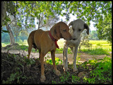 2 dogs copya.jpg