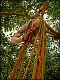sadhu hanging.jpg