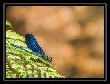 01-June-12 Dragonfly