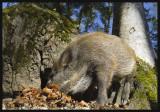 Bayerischer Wald_7009826.jpg