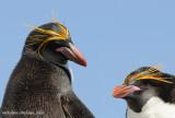 Falklands (Islas Malvinas)