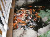 Fish in the Atrium