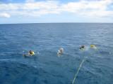 Looking for sea turtles