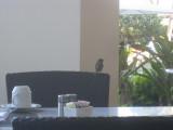 Birdie at breakfast