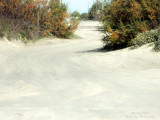 Galveston Island, Surfside & San Luis Pass
