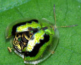 beetle-bot-2F.jpg