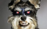 mean-dog.jpg
