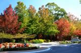 autumn glory 1