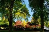 autumn glory 2