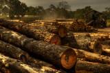 sawmill, Kuitpo forest
