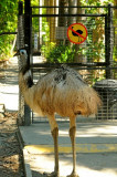 Can't this emu read a clear sign?!