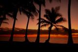 Palm Cove, 2011