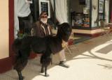 alpaca-poodle