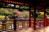 rhododendron garden, HDR