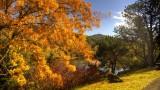 autumn, Mt. Lofty Botanic Garden