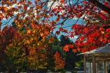 autumn on Main St.