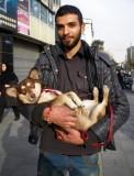 Arash Holding Yashar