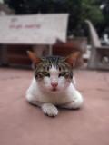 Assertive Pussy Cat