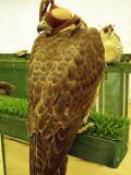 Calm State Falcon