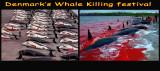 Denmark's Whale Killing Festival !!
