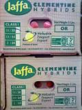 Israeli Jaffa Clementine