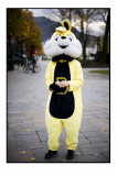 75. Yellow rabbit.......