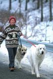 Entiat Valley Local  Roberta Bellinger Walking Her Dogs ALong Entiat River