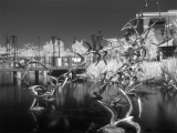 Black & White Infrared Photography