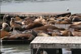 Seals at Fishermans Wharf.JPG