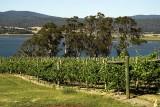 Tamar Valley vineyards, Tas