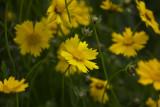 Wild Flower 4.jpg