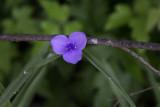 Wild Flower 10.jpg