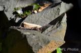 Day 19 Rocks  Tower 20111017_22  Stonecrusher.JPG