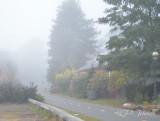 Day 27  Foggy Day 20111024_16 Crossing Guard.JPG