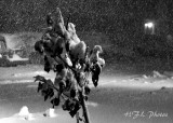 The Great  October, 2011 Blizzard