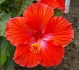My Summer Garden 2011